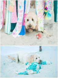 Boho Beach Bridal Shower. Puppy playing in the sand and underneath the photobooth display. Nicole Klym Photography. bridesmaidsconfession.com